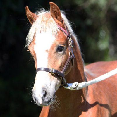 Tooravale Armani Supreme Foal Photo: Bridey Lee
